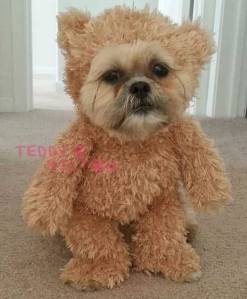 munchkin-the-dog-cute-pup-teddy-bear-status__oPt